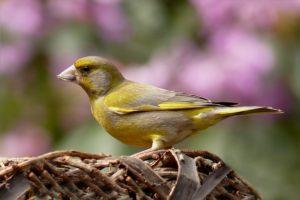 Fernglas zur vogelbeobachtung u top empfehlungen kaufratgeber